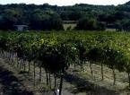 Texas Hill Country Wine Tours by Limo
